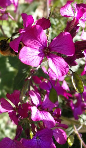 Flower Head Flower Tree Pink Color Petal Purple Close-up Plant