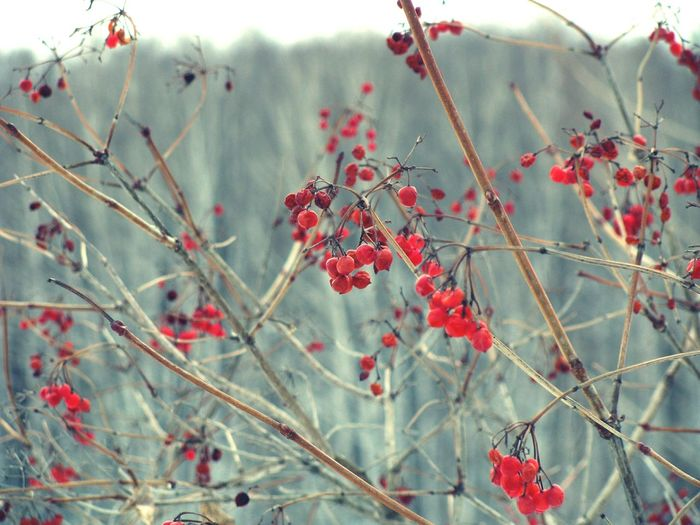 Nature EyeEm Nature Lover Red Berry Spring