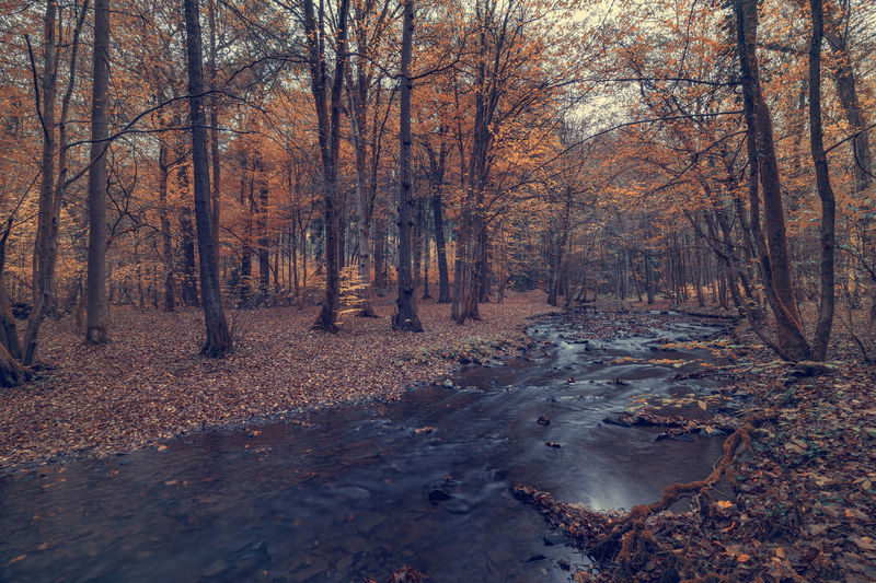 River in the forest in autumn. Art Backgrounds Tree Forest Autumn Land Plant Nature Change Tranquility No People Day Water Bare Tree WoodLand Tranquil Scene Scenics - Nature Outdoors Tree Trunk Trunk Non-urban Scene Leaves