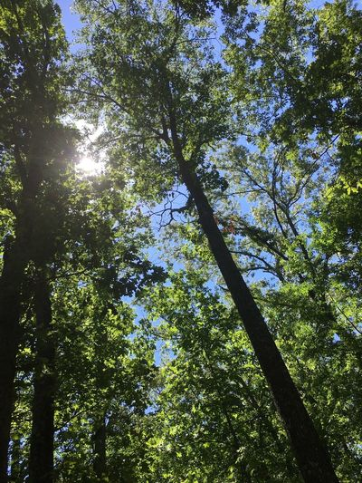 Beauty In Nature Sunlight Tree Nature Outdoors Sunny Low Angle View Growth Forest