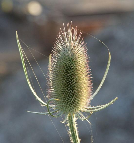 Bloom Blume Blüte Dry Flower  Flower Trockenblume