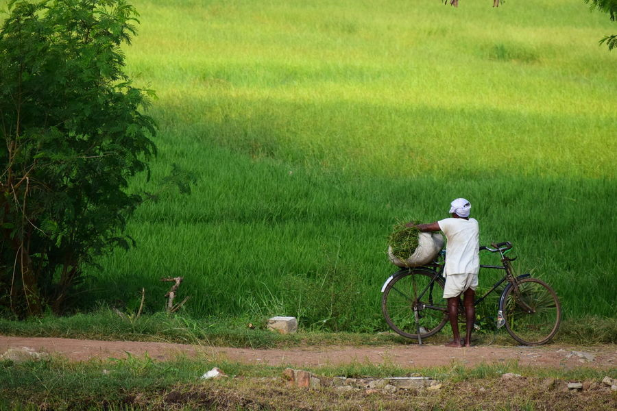 old farmer started his day Rural Scene Rural Landscape Rural Beauty Countryside Countryside Life Countryside India Country Side Farm Way Of Life EyeEmNewHere Green Plants Farmer Old Farmer Bicycle Tree Scarecrow Cultivated Land Plantation Farmland Agricultural Field Rice - Cereal Plant Farm