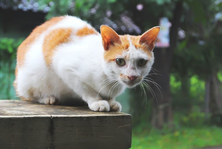 Pets Animal Beauty Eye Domestic Cat Animal Hair Ear Mammal One Animal Paw Domestic Animals No People Tail Cat Cat Watching