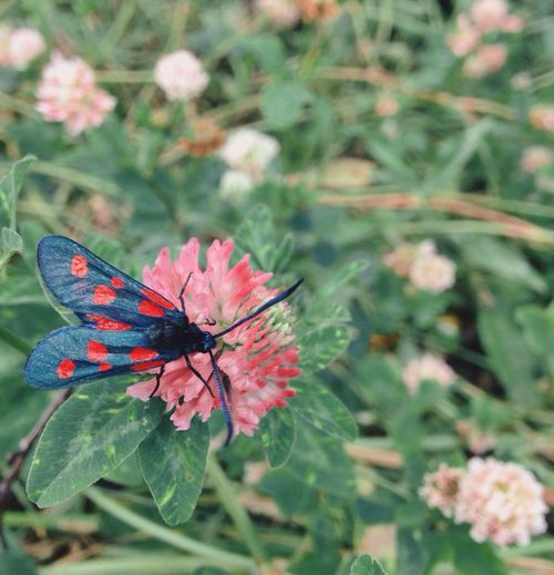 Flower Fragility Insect Beauty In Nature Nature One Animal Focus On Foreground Animal Themes Petal Plant No People Close-up Animals In The Wild Outdoors Freshness Day Butterfly - Insect Flower Head Pollination