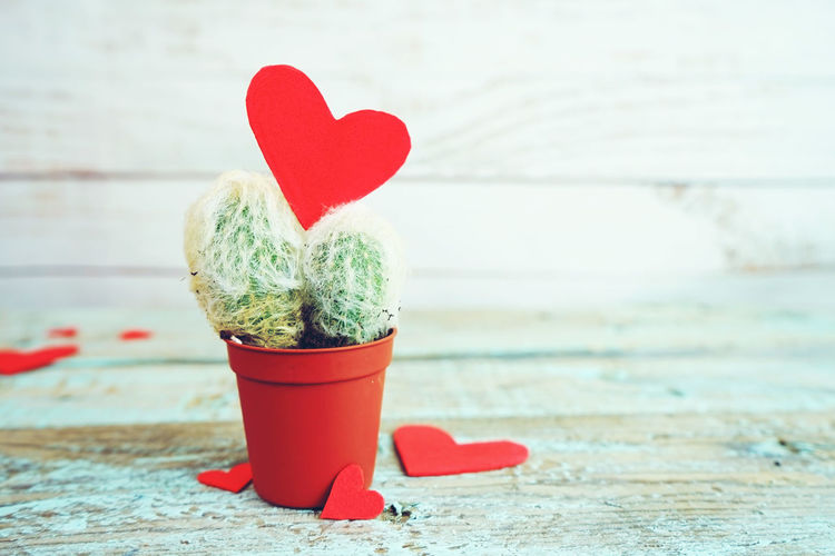 Heart Shape Red Positive Emotion Emotion Love Close-up Creativity No People Focus On Foreground Wood - Material Still Life Indoors  Day Decoration Table Art And Craft Green Color Valentine's Day - Holiday Cactus Heart Valentine's Day  Love Backgrounds Background