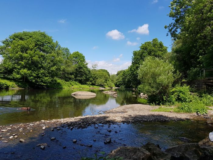Dog Swimming Farming Tourism Travel No Filter Wales Beauty In Nature Nature Stunning Scenery Riverbank Natural Light Tree Water Blue Sky Cloud - Sky Countryside Stream Tranquil Scene Horizon Over Water Pebble Calm