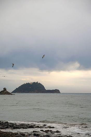 sea in winter with seagulls flying on island Liguria,Italy Seagulls Flying Seagulls Island Winter Winter Sea Sea In Winter Wintertime Cold Sea Cold Season Rocks And Sea Isle Cloud - Sky Grey Sky On Sea