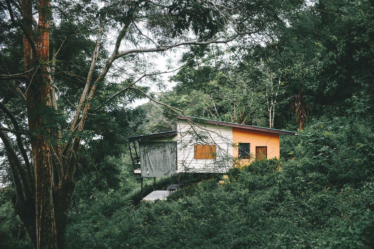 Phuket Thailand Architecture Beauty In Nature Branch Building Exterior Built Structure Coconut Island Day Forest Green Color Growth Low Angle View Nature No People Outdoors Sky Tree