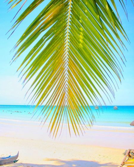 Beach Blue Clear Sky Day Horizon Over Water Nature Outdoors Palm Leaf Palm Tree Sand Scenics Sea Sky Tranquil Scene Water