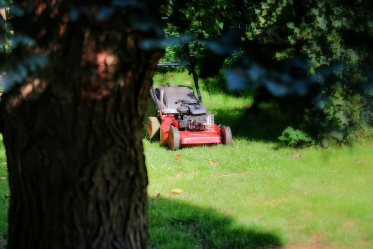 Lawn Mowers Tree Green Color Grass Nature Growth Outdoors Taking Photos EyeEm Nature Lover Nature On Your Doorstep Beauty In Nature Nature Close-up From My Point Of View StillLifePhotography Growth Freshness Plant Farm Life