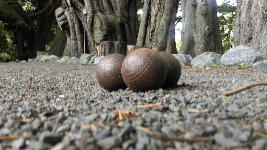 027 boule set up perspective Aboutpassion Animal Animal Shell Animal Themes Animal Wildlife Ball Camper Close-up Day Field Forest Land Nature No People Outdoors Plant Rock Selective Focus Shell Solid Surface Level Tree Vanlife