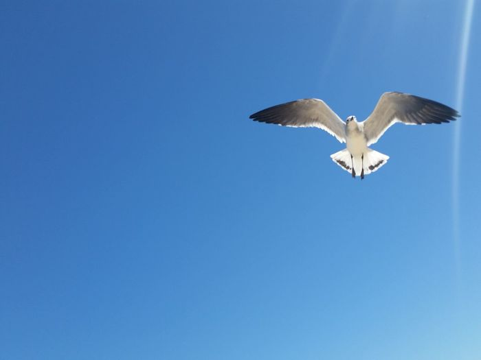 Spending time at the beach and I was able to Capture this Seagulls Flying Over Me No Filter Blue Skies
