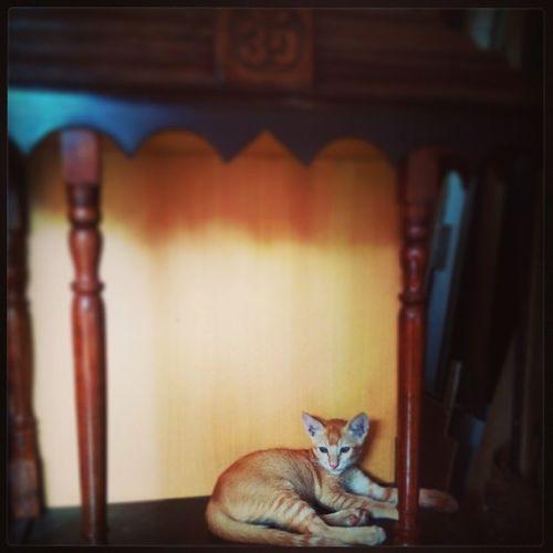 God. 100happydays Catsofinstagram Catgod Goddess sitting cutie comfortable foundmygod takengodsplace ilove ilovecats instamoment instahappiness instacat instalove instalike instapic