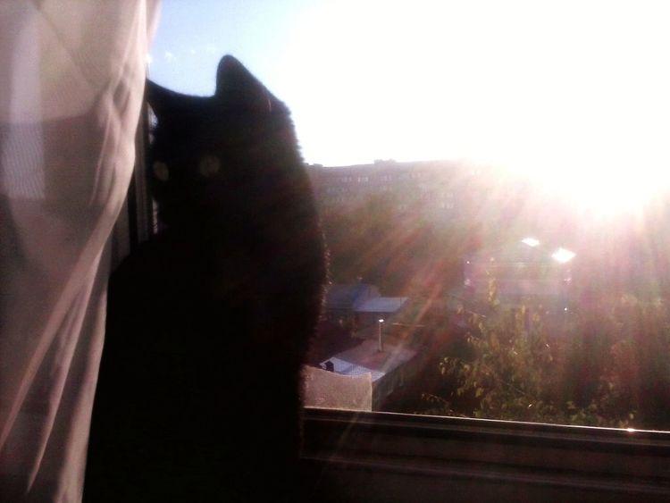Sun Light Cool ☀ Cat❤ Cat My Cat Black BLackCat Myblackcat
