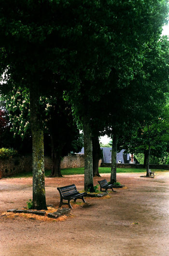 Day Empty Grass Growth Landscape Nature No People On The Rain Outdoors Park - Man Made Space Tree