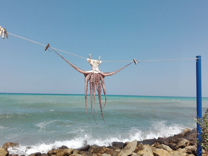 Octopus Drying On Rope Against Sea