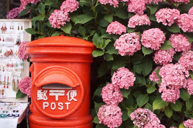 Mail box against hydrangea flowers blooming on plant