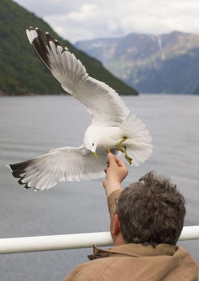 Man feeding seagull