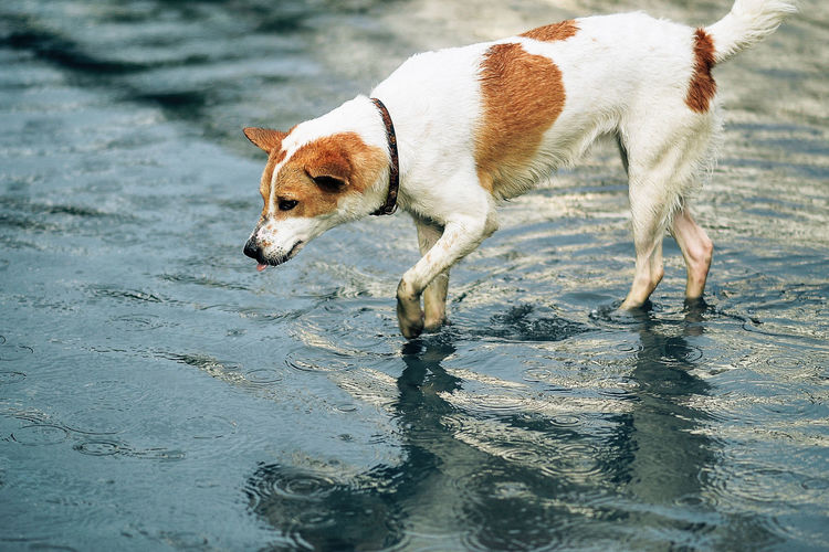 Side view of dog on wet shore