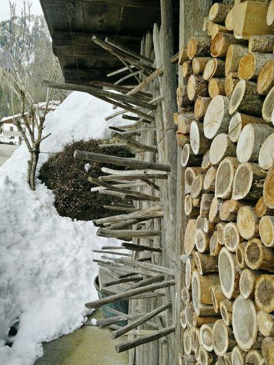Wood composition Wood Art Sauris