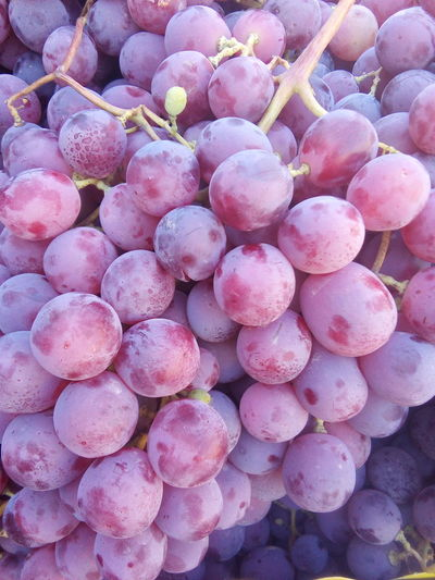 Grapes 🍇 Large