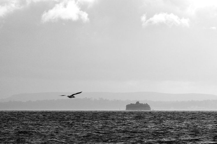 In Flight Animal Wildlife Animals In The Wild Beauty In Nature Bird Blackandwhite Cloud - Sky Day Flying Nature One Animal Outdoors Scenics - Nature Sea Seagull Sky Water