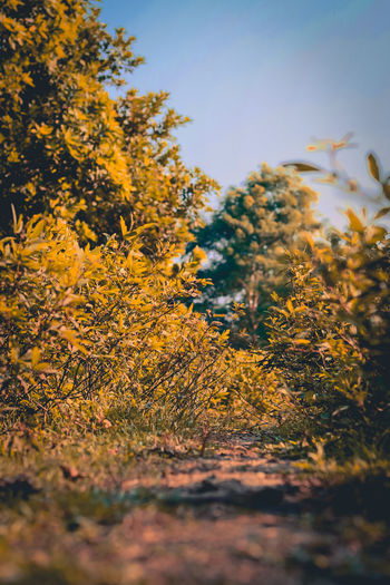 Way Tree Multi Colored Autumn Leaf Clear Sky Sunset Tree Area Forest Yellow Rural Scene Wildflower Autumn Collection Uncultivated Flora