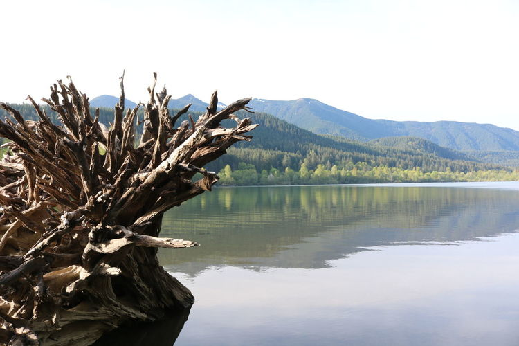 Hiking Nature Washington Beauty In Nature Clear Sky Day Dead Plant Idyllic Lake Mountain Mountain Range Nature No People Non-urban Scene Outdoors Plant Rattle Reflection Relax Scenics - Nature Sky Tranquil Scene Tranquility Tree Water