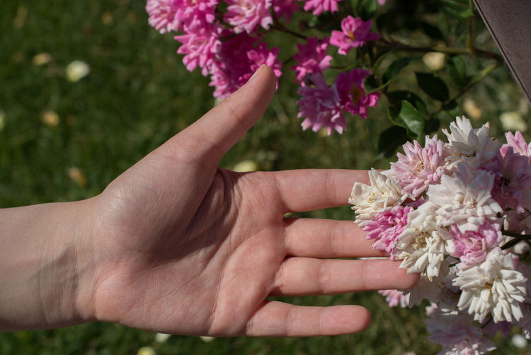 Close-up of woman hand touching pink flowering plant outdoors