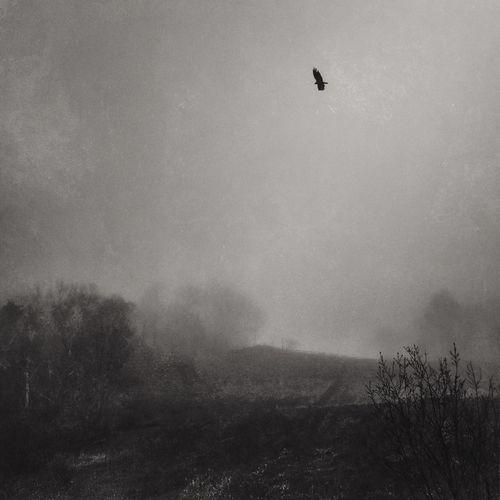 Bird flying over landscape