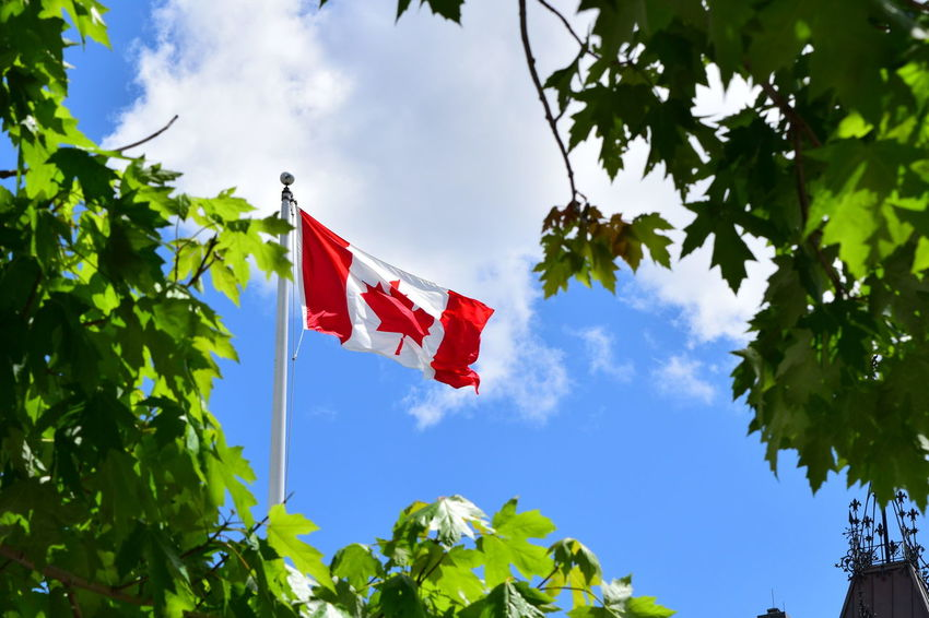 Blue Branch Canadian Flag Cloud - Sky Day Drapeau Canadien Flag Flag Pole Fluttering Green Color Growth Hanging Identity Leaf Low Angle View Maple Leaves National Flag Outdoors Patriotism Plant Pole Oh Canada! Maple Leaf Canadien Wind