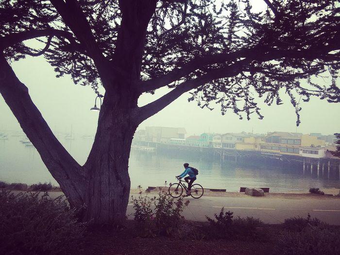 Monterey that's