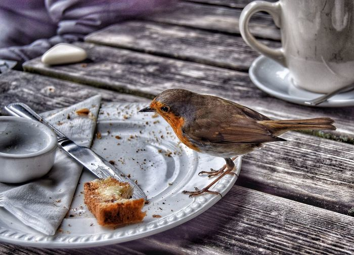 Close-Up Of Robin By Leftovers In Plate On Table