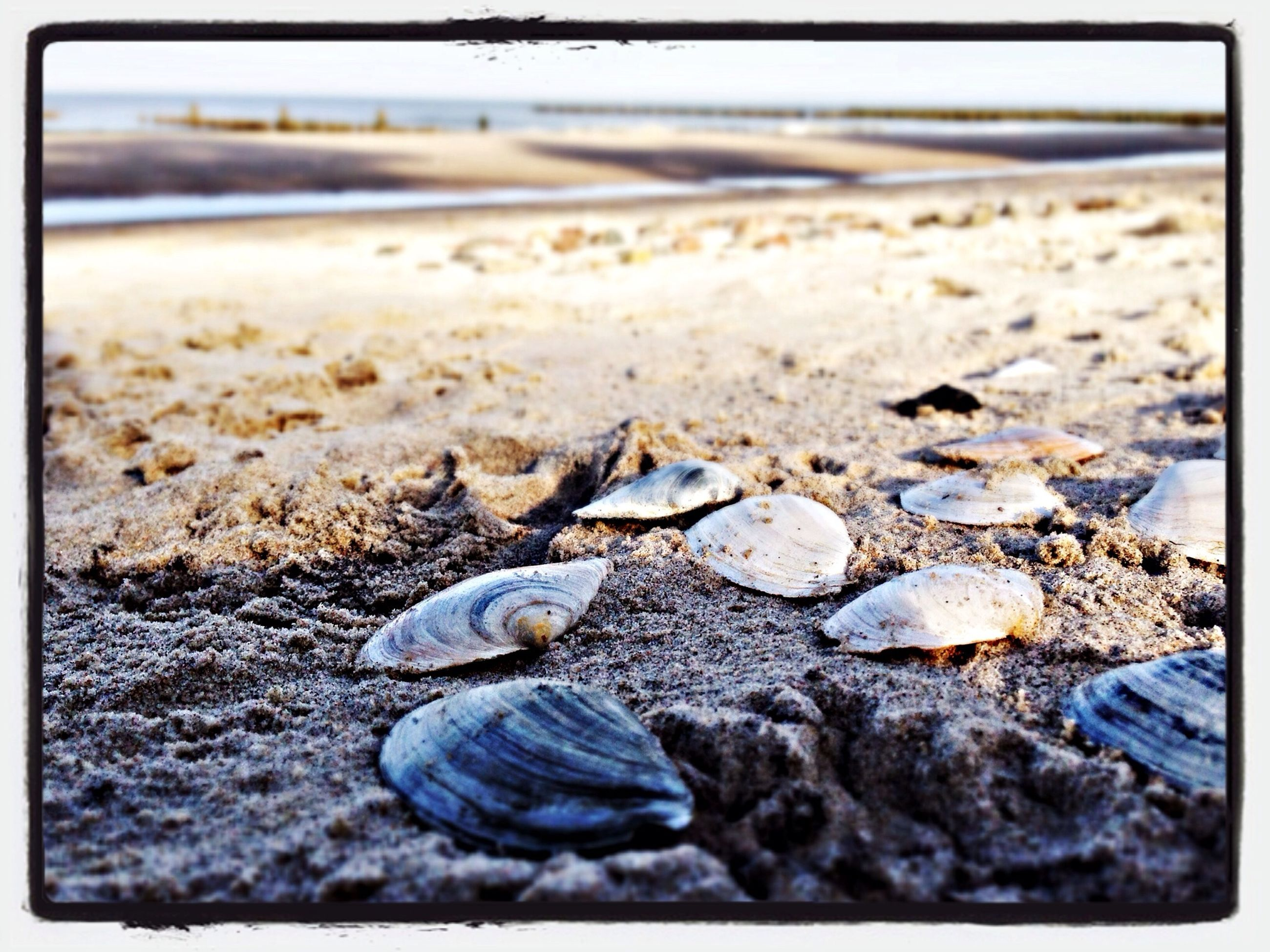 beach, sand, shore, transfer print, pebble, auto post production filter, seashell, stone - object, sea, surface level, nature, selective focus, tranquility, water, stone, close-up, shell, rock - object, animal shell, outdoors