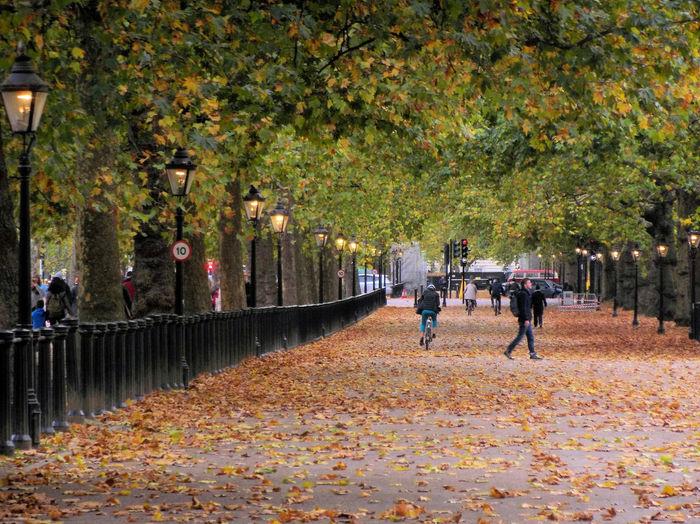 People walking on autumn leaves