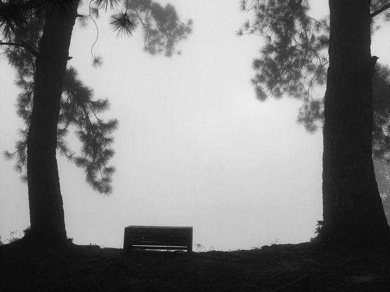 Fog #foggy #bench Black And White Friday