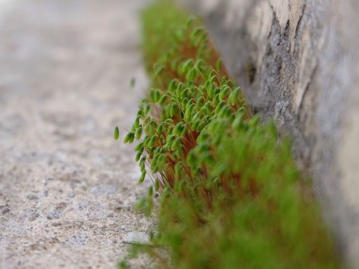 на какую из линий Васильевского ни зайди параллельно пространству время а ты весне... Spring остров чудес