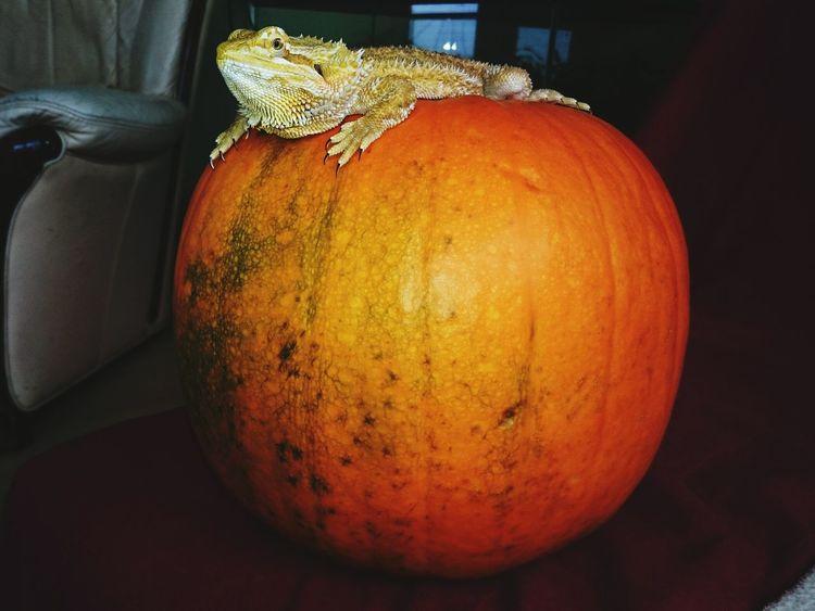 Halloween Happy Halloween Tetzuo London