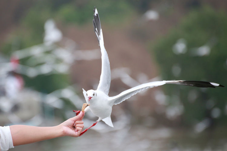 Close-up of hand holding bird flying