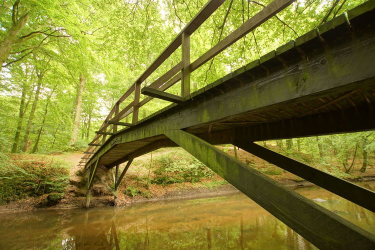 Low angle view of bridge in forest