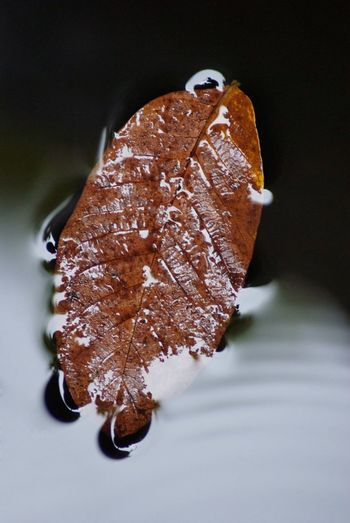 High angle view of dried leaf on table