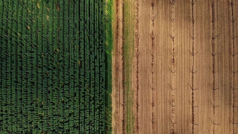 Djispark Green Dronephotography Dji Birds Eye View Slovenia Hops Lines Lines And Shapes Djiphotography Droneshot Drone View Droneart Drone Landscape Countryside Greenery Flora Farmland Plantation Vegetation Plowed Field Grassland Agricultural Machinery Combine Harvester Young Plant Plough Grain Agricultural Field Hay Bale Lakeside