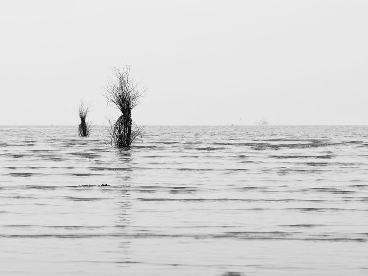 Northsea No People Outdoors Sea And Sky Seaside Reflection Nature Black And White Seascape Perspective From My Point Of View Taking Photos Blackandwhite Black&white Mudflat Black & White Bnw Reflection_collection Monochrome Photography