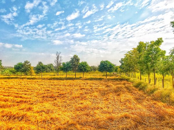 Field Agriculture Tree Cloud - Sky Landscape Sky Nature Farm Beauty In Nature Rural Scene Tranquility Scenics Tranquil Scene Growth No People Outdoors Day Cloudy