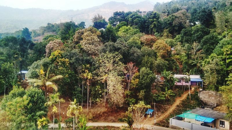 Tree Growth Nature Plant Beauty In Nature No People Green Color Day Outdoors Scenics Mountain Sky Hello ❤ Hello World ✌ Professionalphotography Click Click 📷📷📷 Taking Photos HelloEyeEm Perfectview Plant Nature Tree Beauty In Nature Landscape Everywhere Greenary