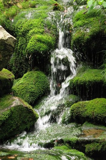 Blurred Motion Day Flowing Flowing Water Forest Green Color Moss Motion Nature No People Outdoors Purity Running Water Splashing Stream - Flowing Water Water Waterfall