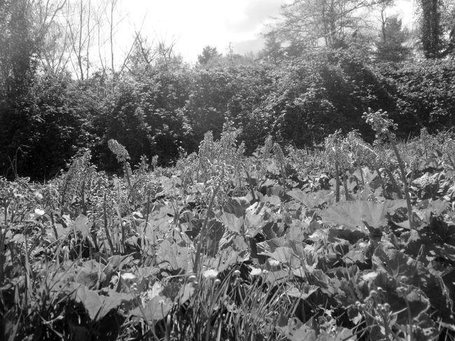 #basilicata #bianco&nero #bianconero #Black&White #fotobianconero #Italia #italy #OldPicture #potenza #potenzainferiore #vialedelbasento