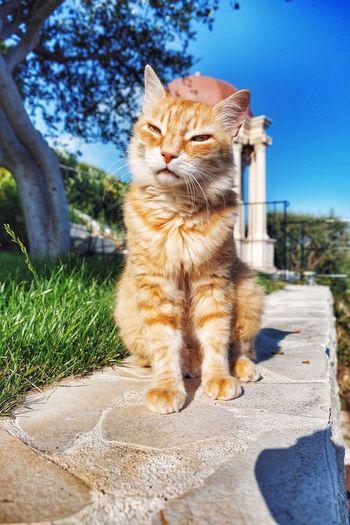 Cat sitting on floor against sky