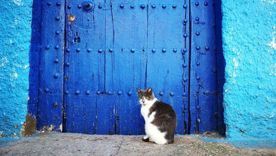 Morocco Rabat Closed Door Front Door Stray Animal