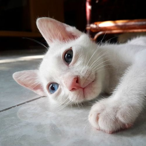 Cat I Love My Cat My Cat Cat Lovers I Love Cats Samsung Galaxy S4 แมว